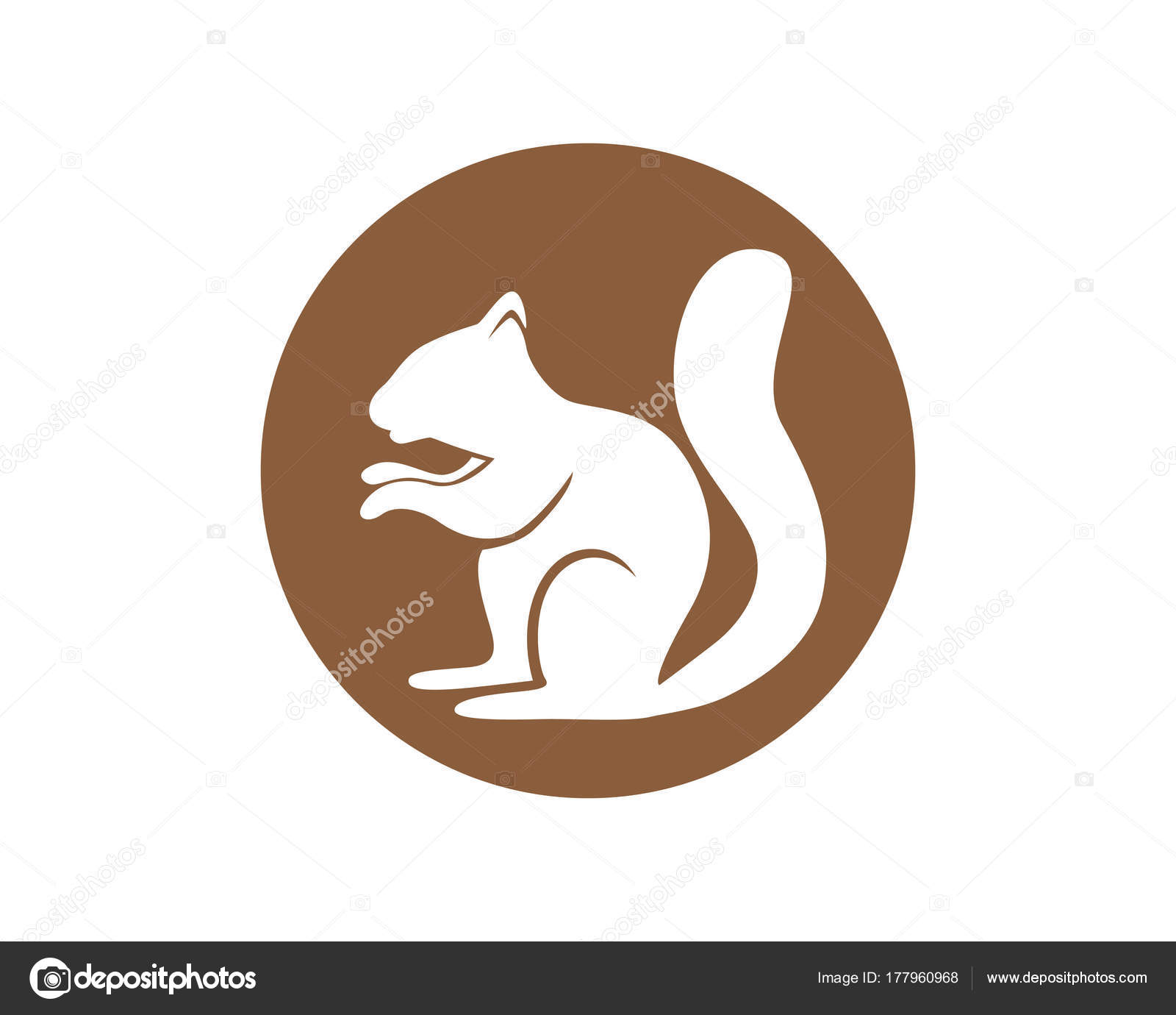 Squirrel animals logo and symbols template icons app — Stock Vector ...