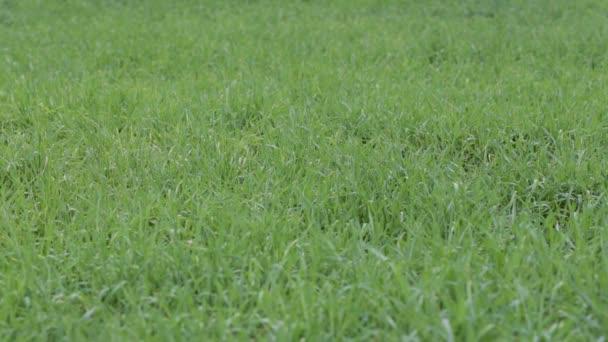 louka s trávou