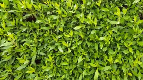 Zelené keře na pozadí. hodně listoví na větvích.