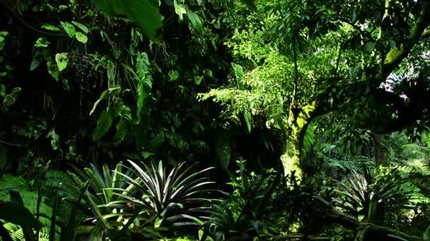 tropische Pflanzen Garten mit Wasserlauf