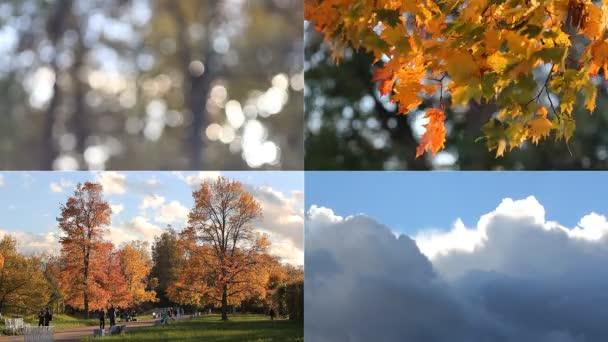 Őszi hangulat. Napos őszi parkban.