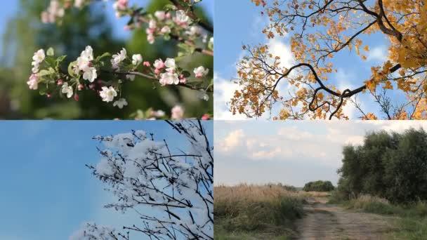 Stagioni, quattro stagioni - inverno, primavera, estate, autunno.