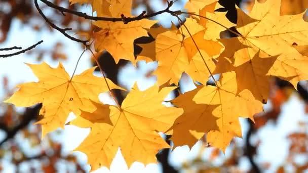 Autumn forest, autumn landscape, golden autumn.