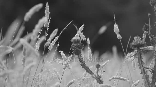 Řepík a květy na letní pole