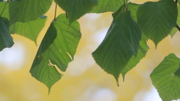 Podzimní les - zelená aspen listy na pozadí podzimního parku. Podzimní krajina, zlatý podzim