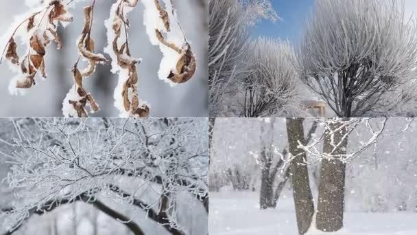 Krásná koláž - zimní les, krásný pohled, vánoční obrázek. Zimní krajina - zasněženém lese za slunečného počasí.