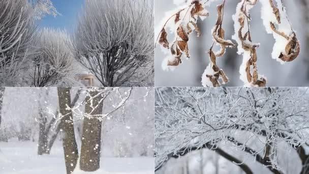 Zimní krajina - zasněženém lese za slunečného počasí. Krásná koláž - zimní les, krásný pohled, vánoční obrázek.
