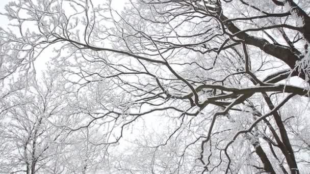 Téli táj - havas ágak a fák, a felhős ég háttér. Az erdő, télen a hó a fák, a komor égen.
