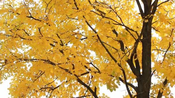 Zlatý podzim, podzimní les
