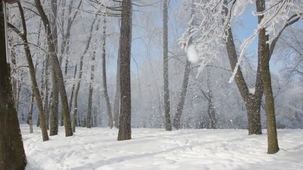 Winterlandschaft - ein tief verschneiten Park mit schönen Bäumen, bedeckt mit Raureif. Ein Weihnachten Bild - ein Winterwald, einem sonnigen Tag in einem märchenhaften park.