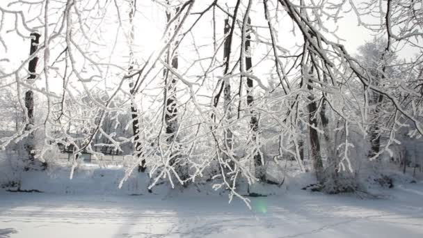 Zimní krajina - sněhem pokrytá park s krásné stromy, pokryté jinovatka. Vánoční obrázek - zimní les, slunečný den v parku pohádka.