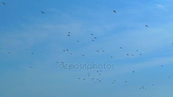 Slow motion, against the blue sky flies a flock of black birds
