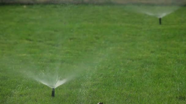 Spruzzo Di Irrigazione Prato Sistema Di Irrigazione Automatica Giardino U2014  Video Stock