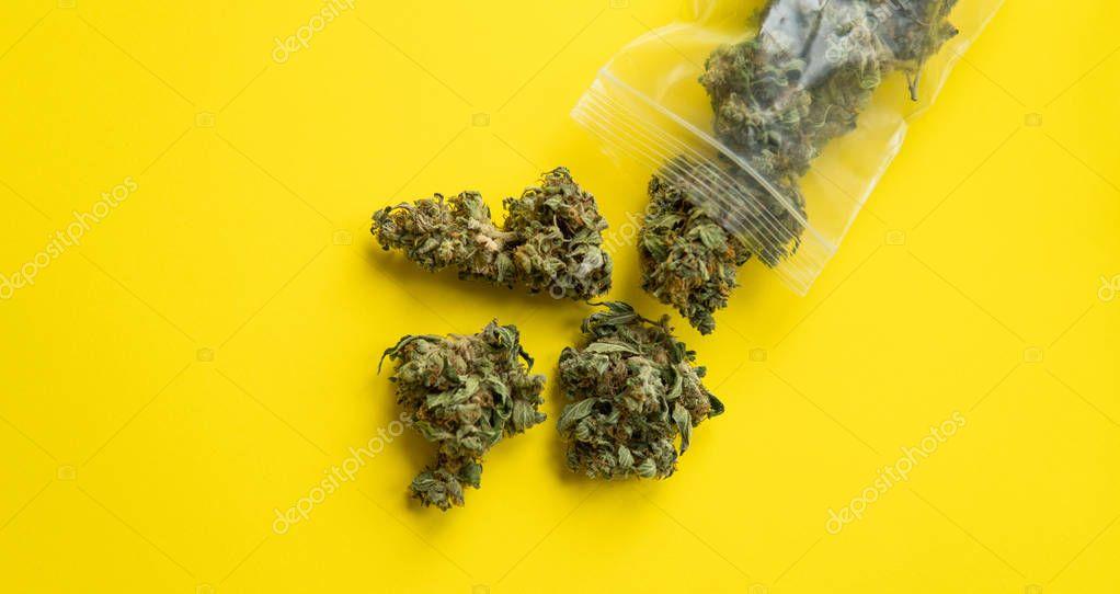 packaged cones of marijuana on a yellow background close-up. Healing marijuana in America