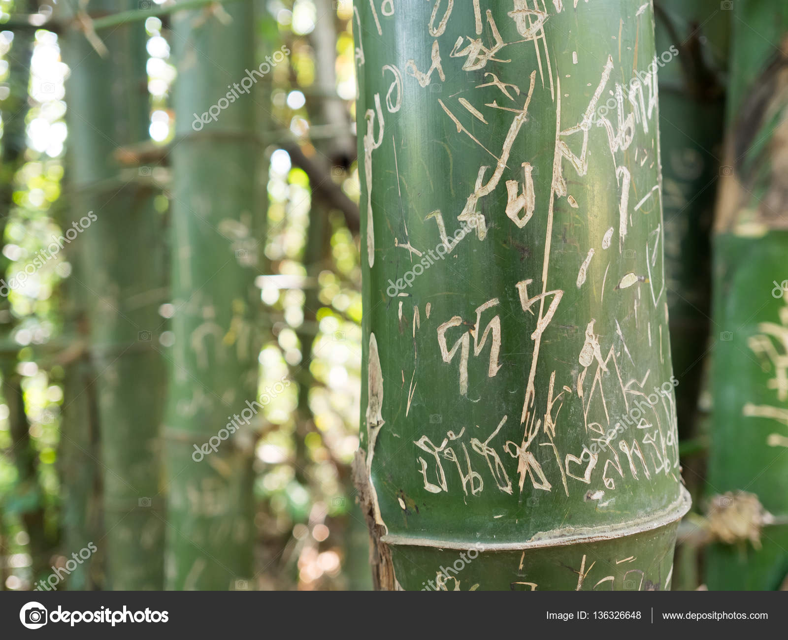 Picture of: Bamboo Tree With Drawing And Writing Stock Photo C Sevendeman 136326648