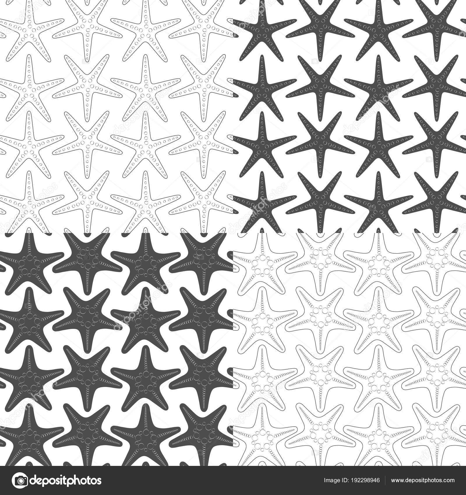 Conjunto Patrones Transparentes Blanco Negro Con Estrellas Mar ...