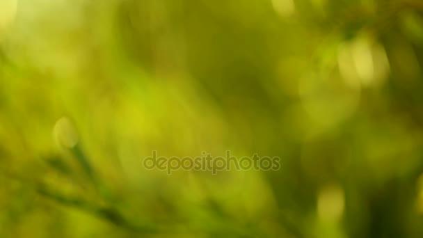 Pozadí zelené přírody