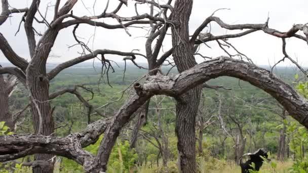 Un árbol con las ramas torcidas. Atmósfera mística. Un lugar ...