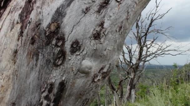 Änderung des Klimas. Der Wald stirbt aus Mangel an Wasser. die globale Erwärmung. Die Bäume verwelken. Bedrohung für die Menschheit. Parallaxeneffekt, bewegt sich die Kamera auf den Schieberegler