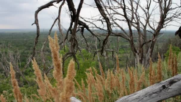 Die Zweige des Baumes alte trocken sind miteinander verflochten. Der Baum auf dem Hügel wurde durch einen Blitzeinschlag oder Mangel an Wasser getötet. Klimatischen Bedingungen. Veränderungen der Natur. Der globale Klimawandel. Mystische
