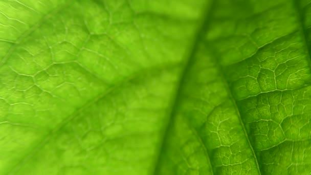 rostlina listů makra. zblízka s kapulárami a rostlinnou strukturou. Biologie