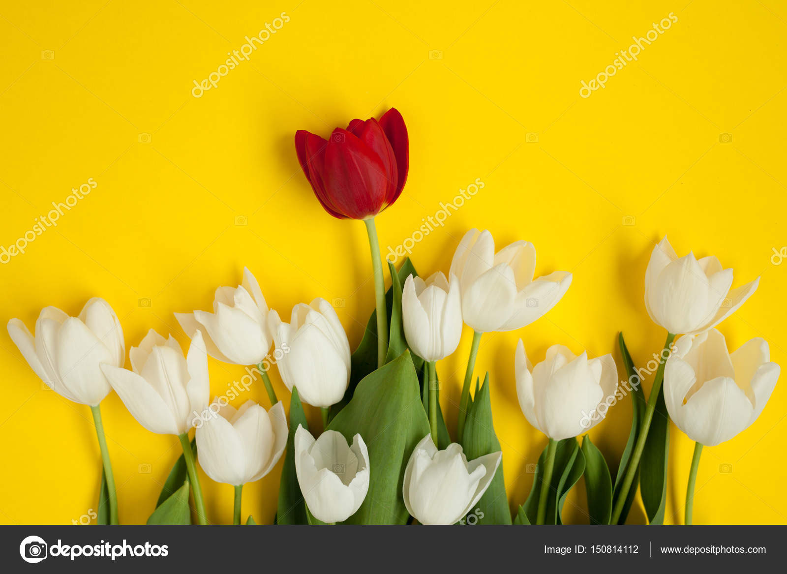Bunch Of White Flowers With Red One Stock Photo Kegfire 150814112