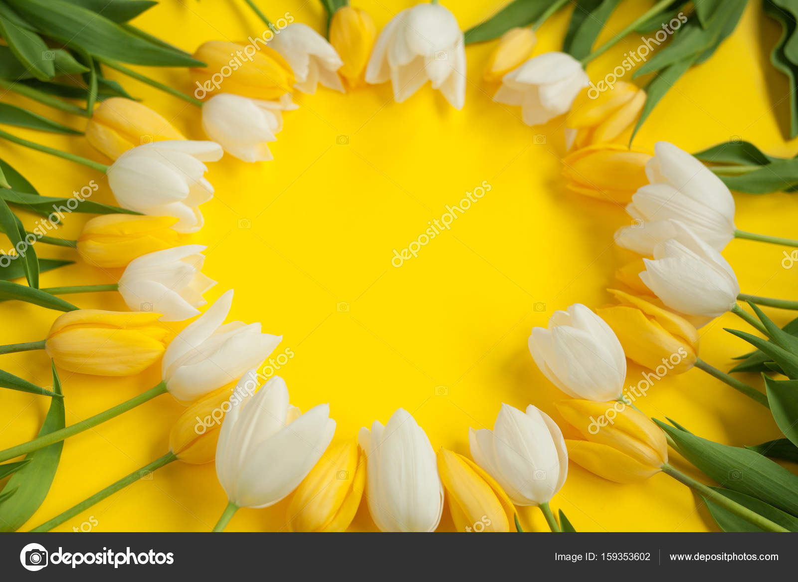 Circle Made With White And Yellow Flowers Stock Photo Kegfire