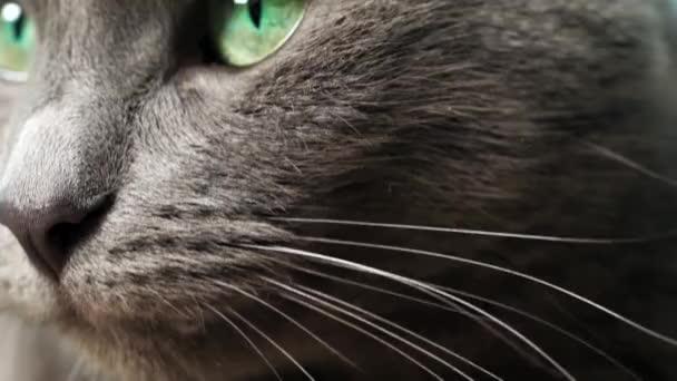 Közelkép fotózás a macska szeme és orra, makro fotózás, a macska fekszik a kanapén