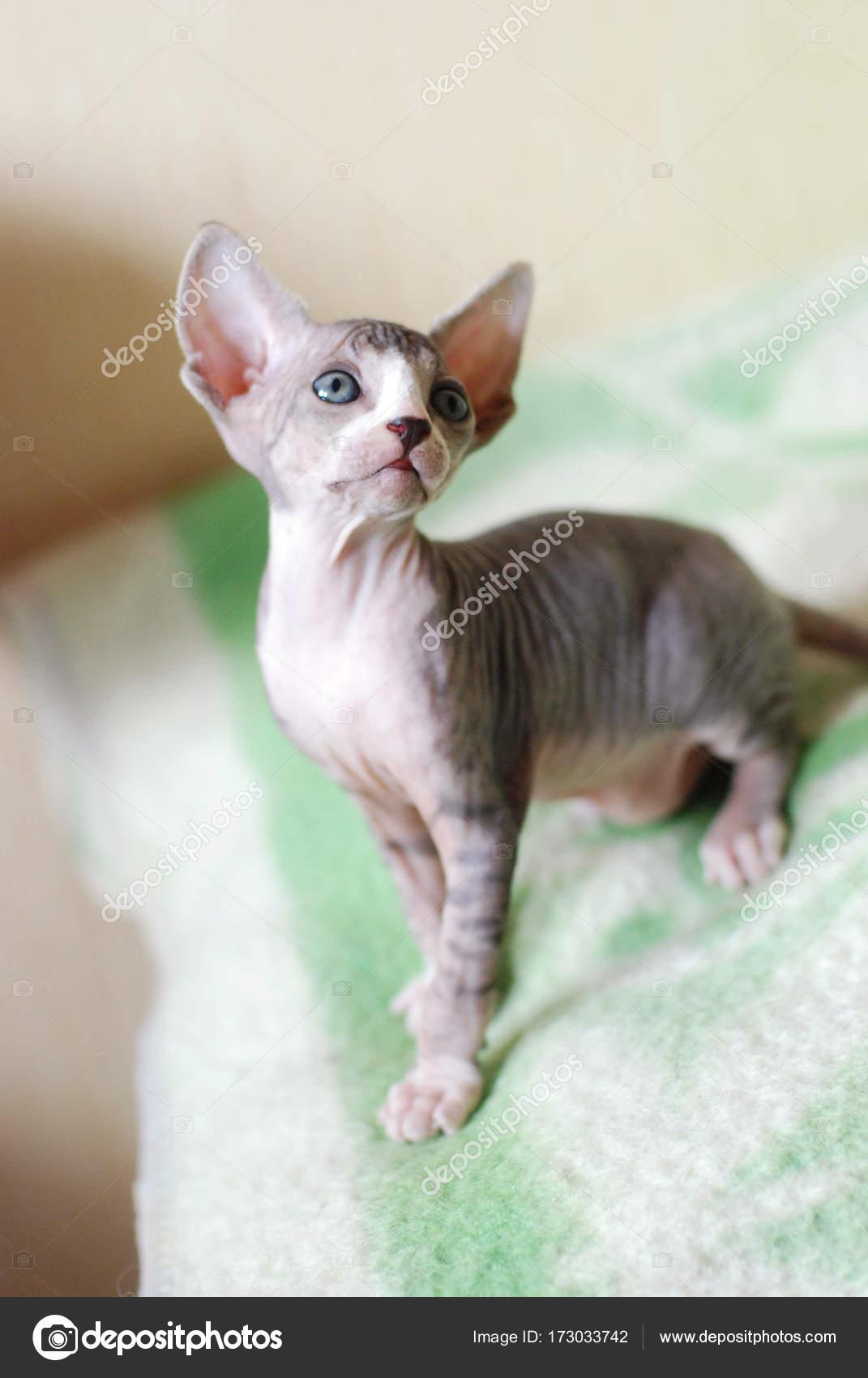fotky zdarma nahé kočičky