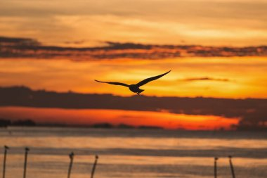 Silhouetted flying seagull with sunrise scene
