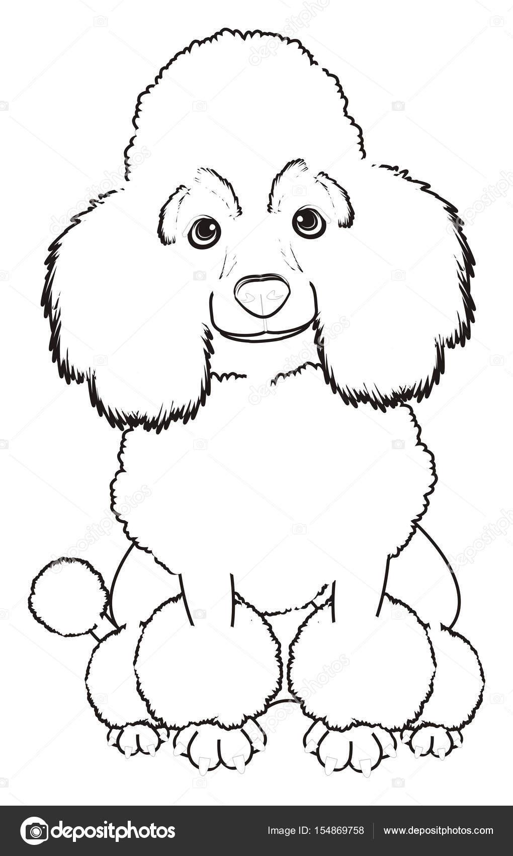 Imágenes Poodle Para Colorear Perro Caniche Lindo Foto