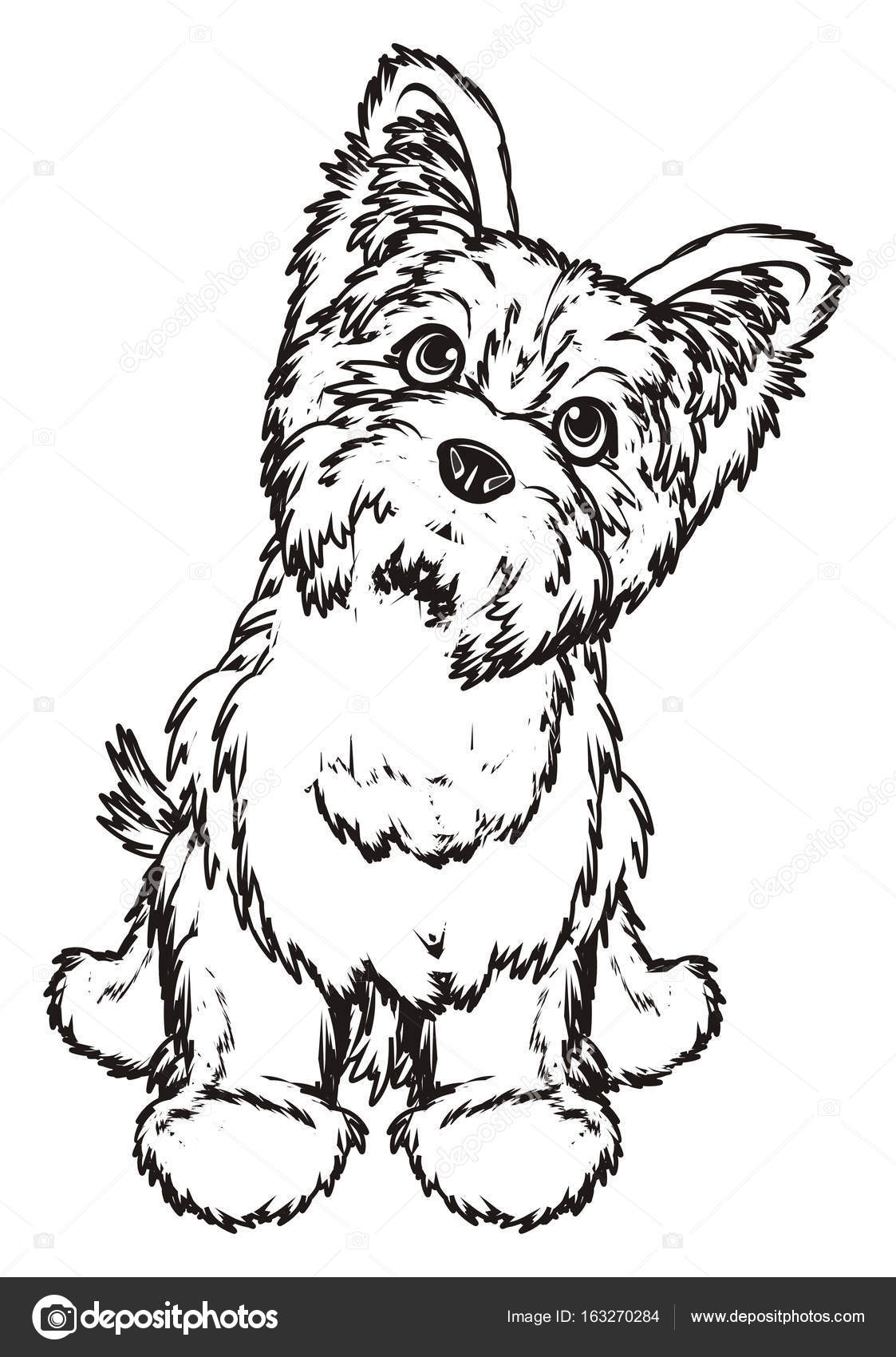 Dibujos: yorkshire terrier para colorear | terrier de Yorkshire