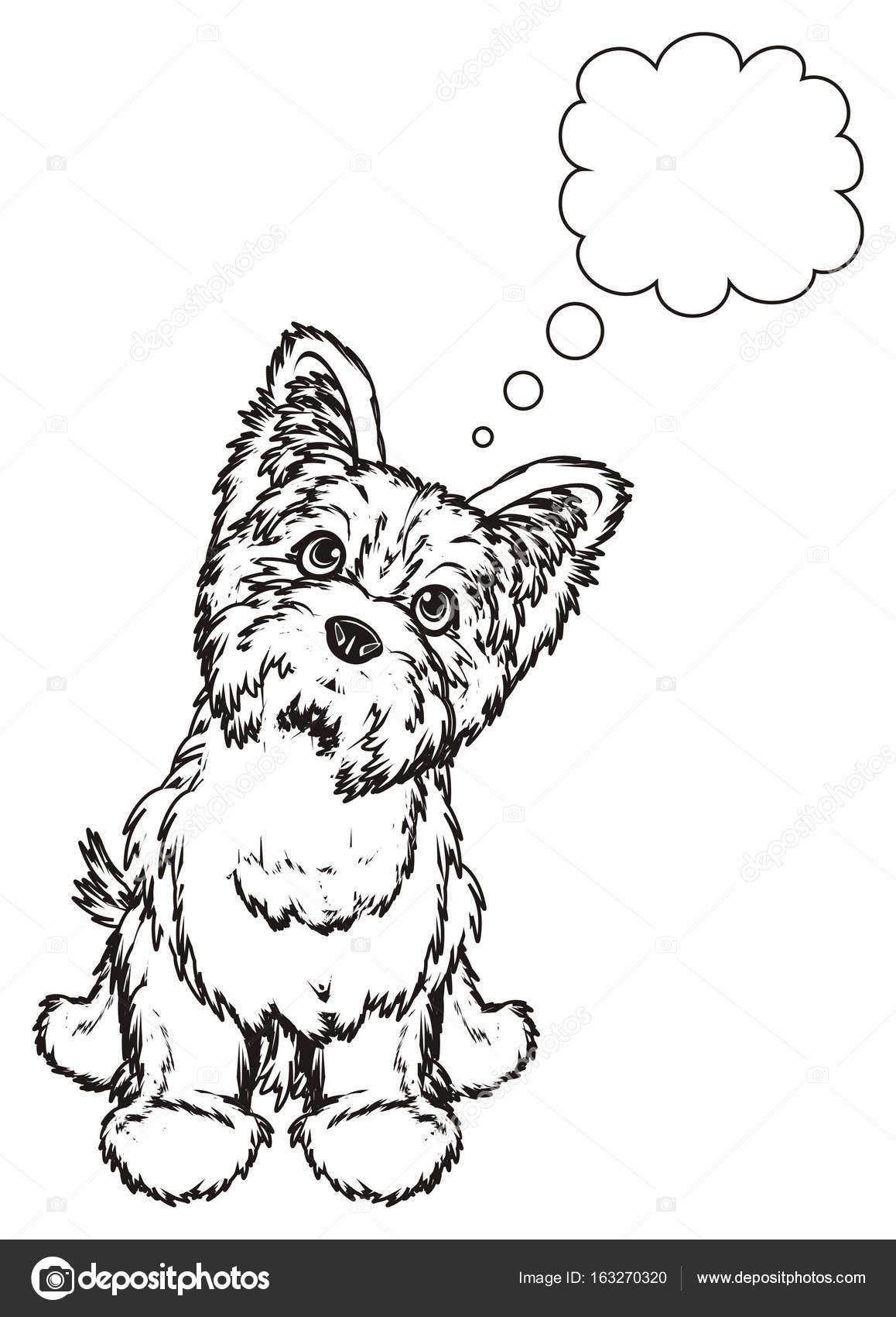 Imágenes De Yorkshire Para Colorir Terrier De Yorkshire Para