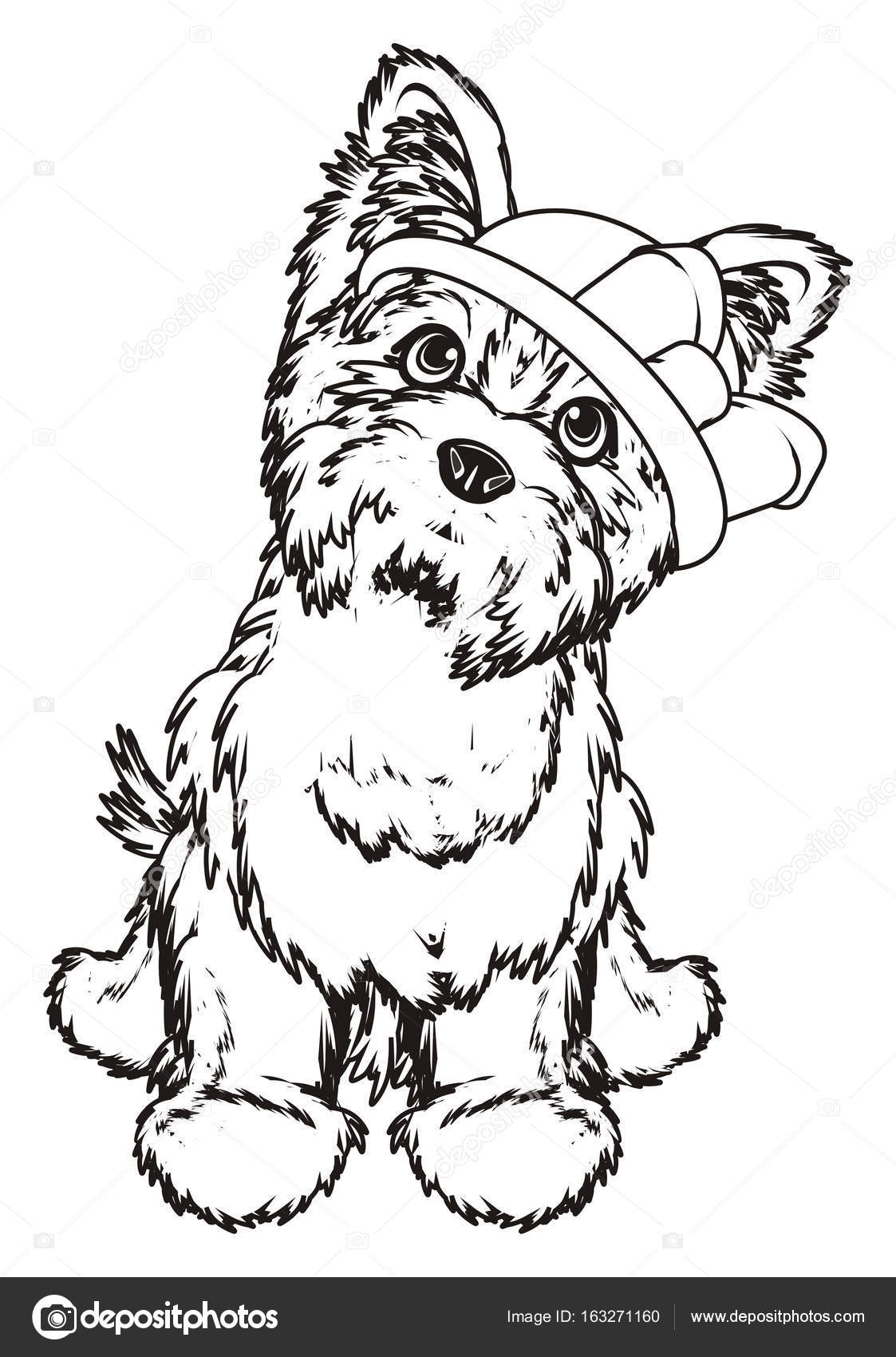 Coloriage yorkshire terrier photographie tatty77tatty - Dessiner un yorkshire ...