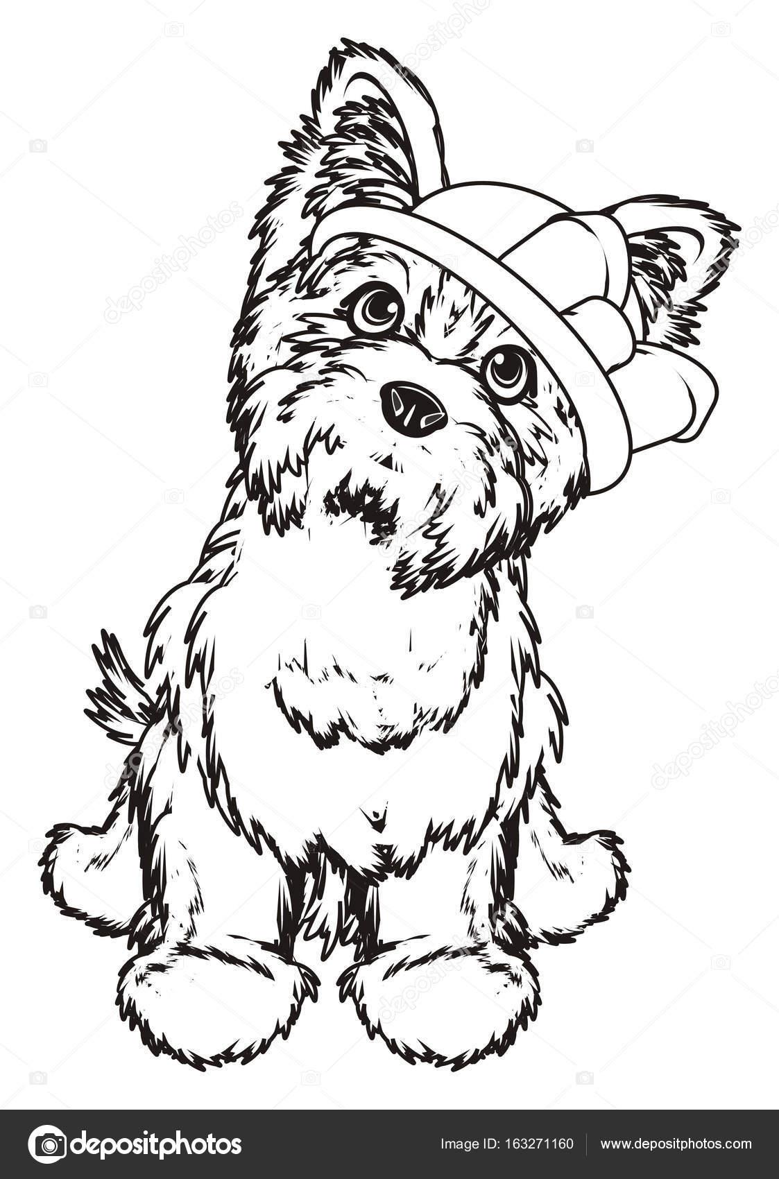 Coloriage yorkshire terrier photographie tatty77tatty - Dessiner un yorkshire ...