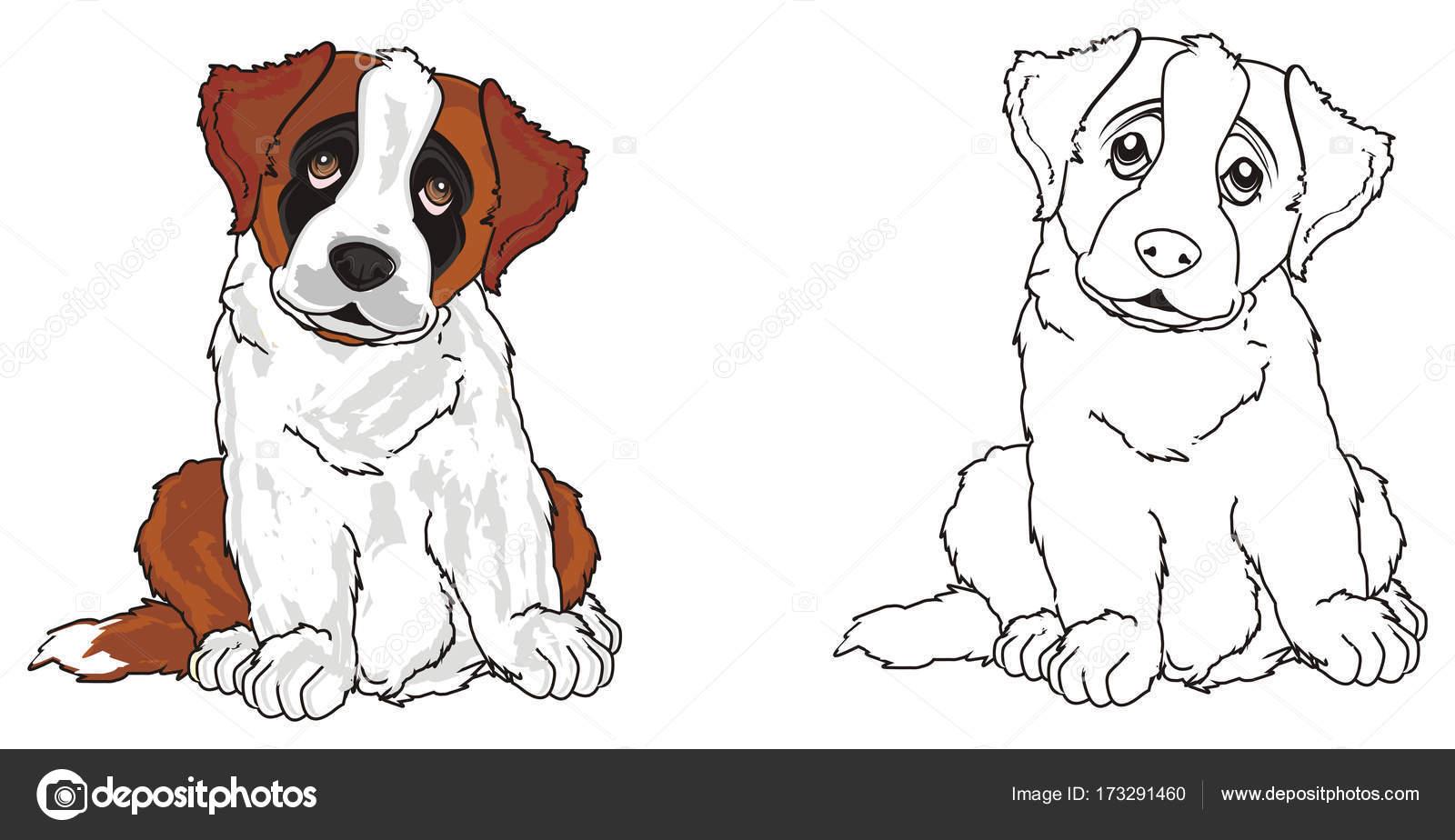 cachorro de San Bernardo — Fotos de Stock © tatty77tatty #173291460