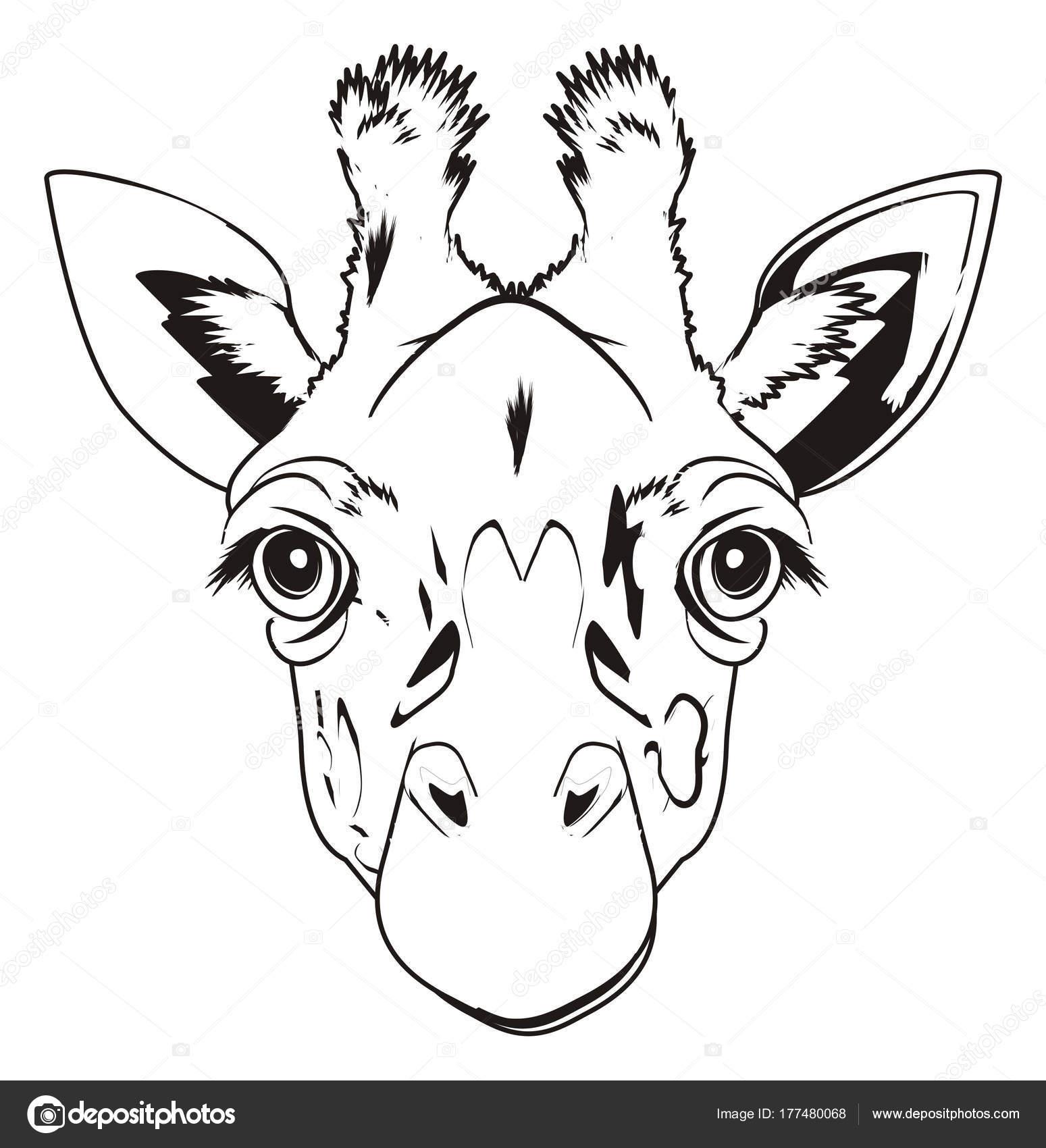 Disegni Colorare Muso Sveglio Della Giraffa Foto Stock