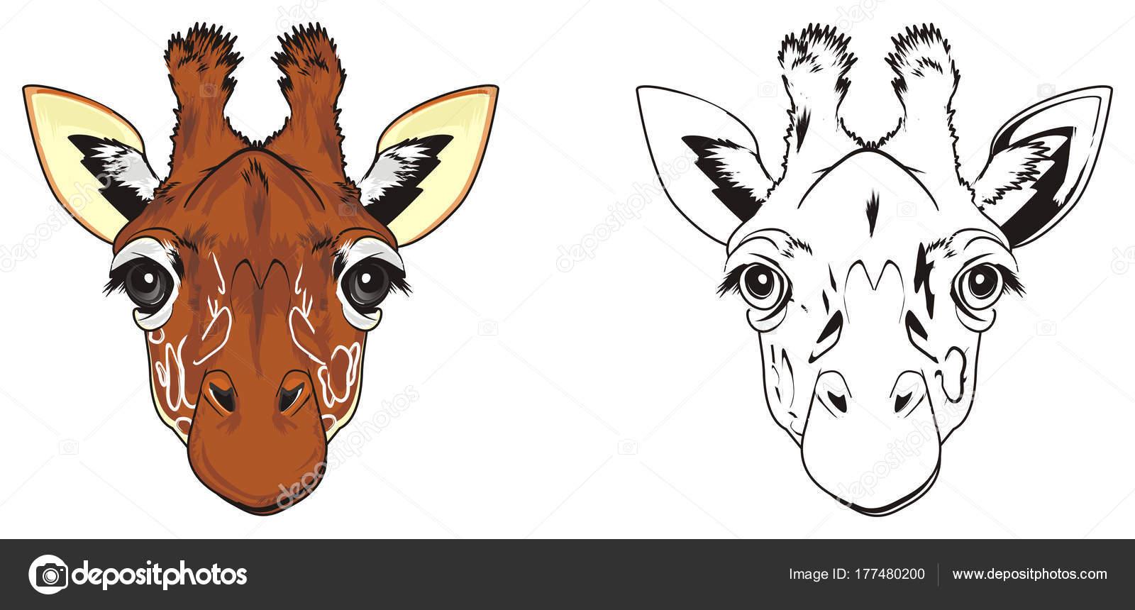 Zürafa Zürafa Burun Boyama Ile Renkli Burun Stok Foto