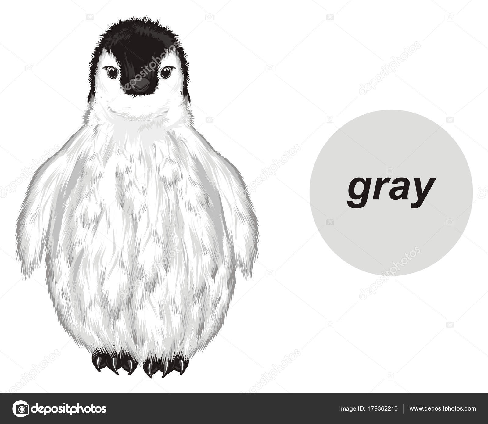 Pingüino Bebé Blanco Color Gris — Foto de stock © tatty77tatty ...