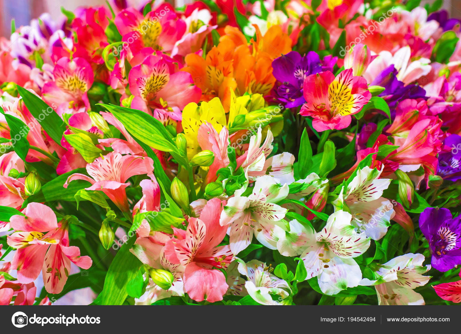 Multicolored flowers in a bouquet beautiful nature background multicolored flowers in a bouquet beautiful nature background stock photo izmirmasajfo
