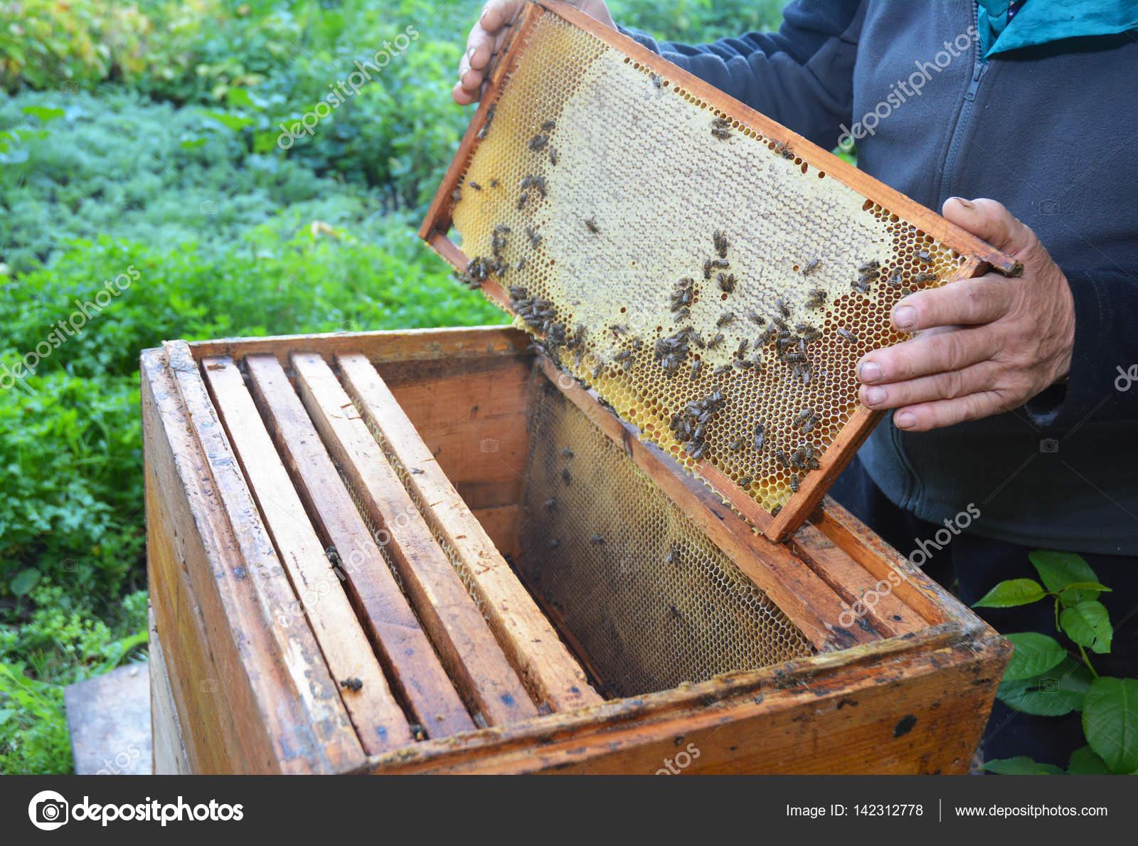 Cerca de la apicultura. Apicultor con su marco de manos de nido de ...