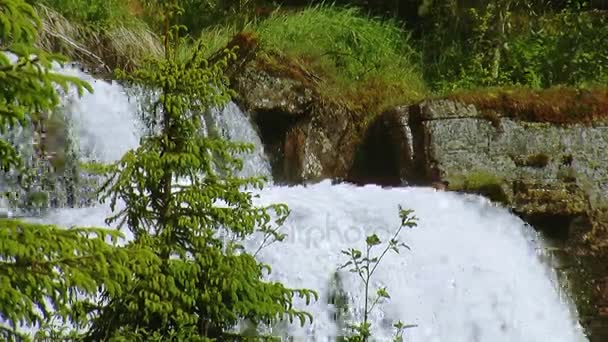 Waterfall splash in green forest. Summer sunny day. Spruces. Landscape. Nature. Mountains. Nobody.