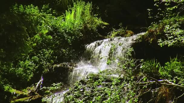 Stream splash in green forest. Summer sunny day. Landscape. Nature. Lot greenery. Nobody.