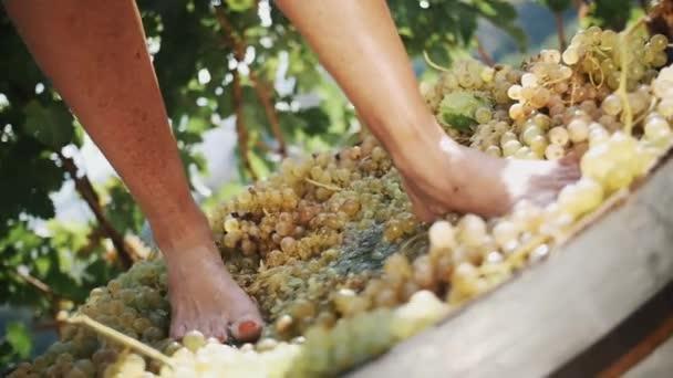 Ženy nohy dupat bílých hroznů v dřevěné tyče