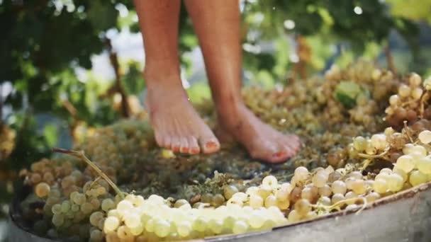Ženské nohy dupat bílých hroznů v dřevěné tyče