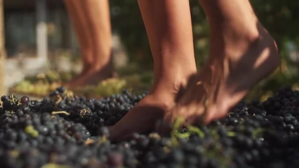 Dva páry ženských nohou šlape hrozny na výrobu vína vinařství