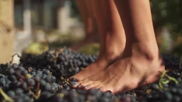 Dva páry nohou ženy šlape hrozny na výrobu vína vinařství