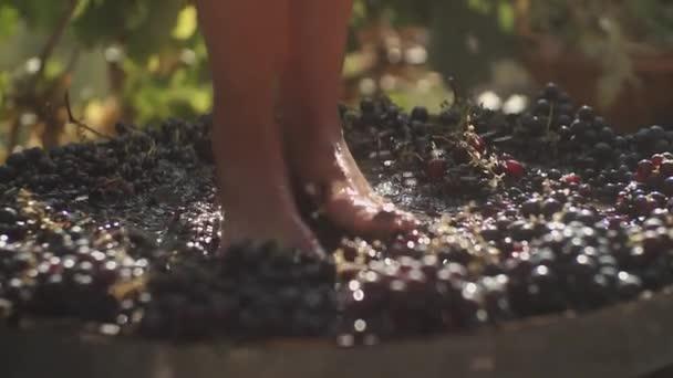 Nohy mladé ženy mačkat hrozny v dřevěný Sud