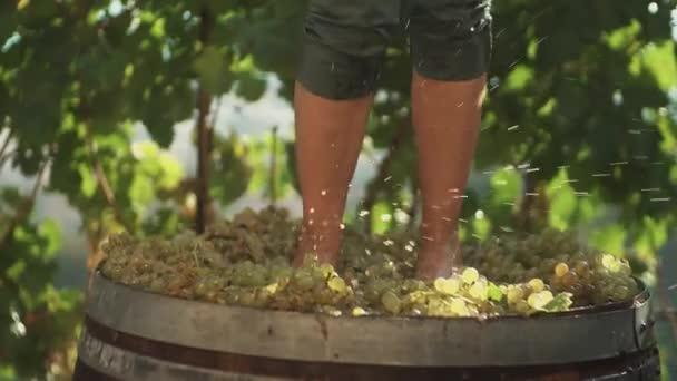 Nohy chlapa v zelených šortkách dupání bílých hroznů v dřevěný Sud