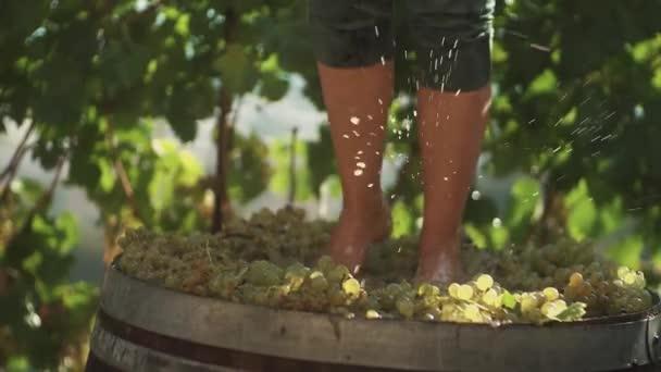Nohy člověka v zelených šortkách dupání bílých hroznů v dřevěný Sud